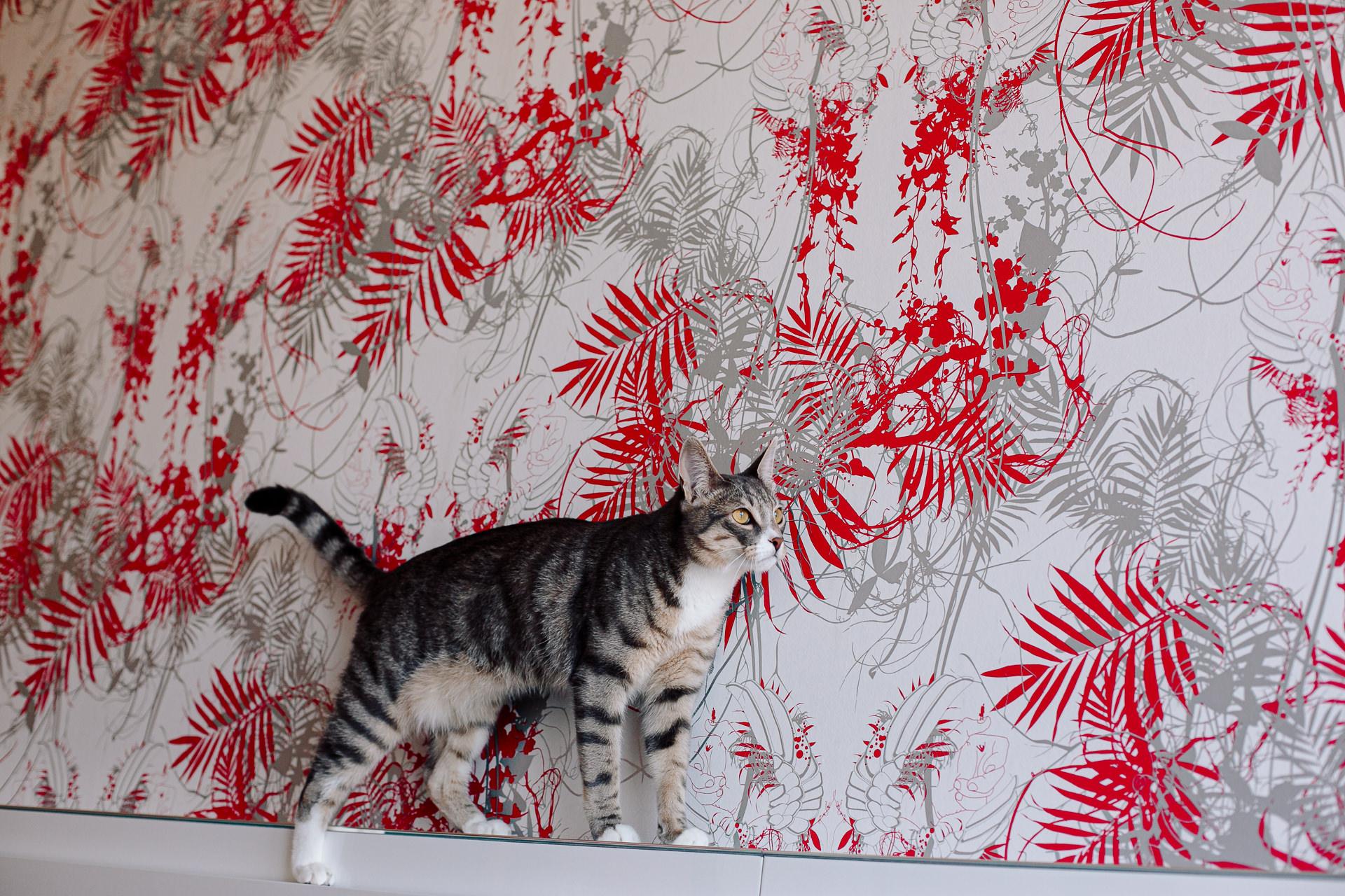 sesion fotos perro gato barcelona 184458