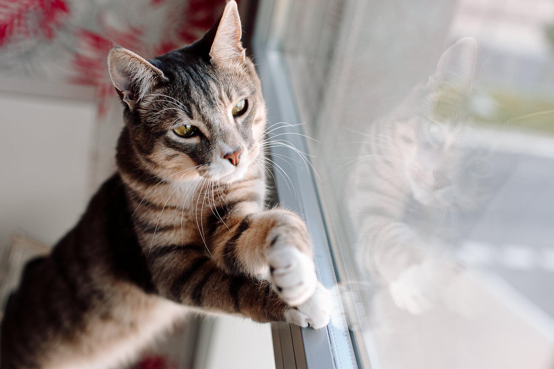 sesion fotos perro gato barcelona 184546